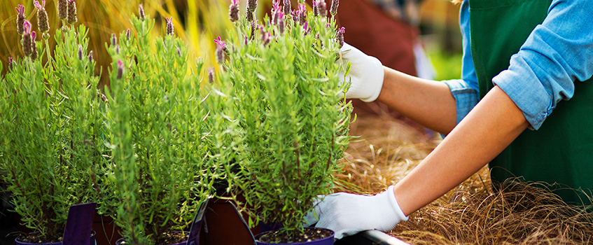 Maatilojen työvoiman saanti turvataan